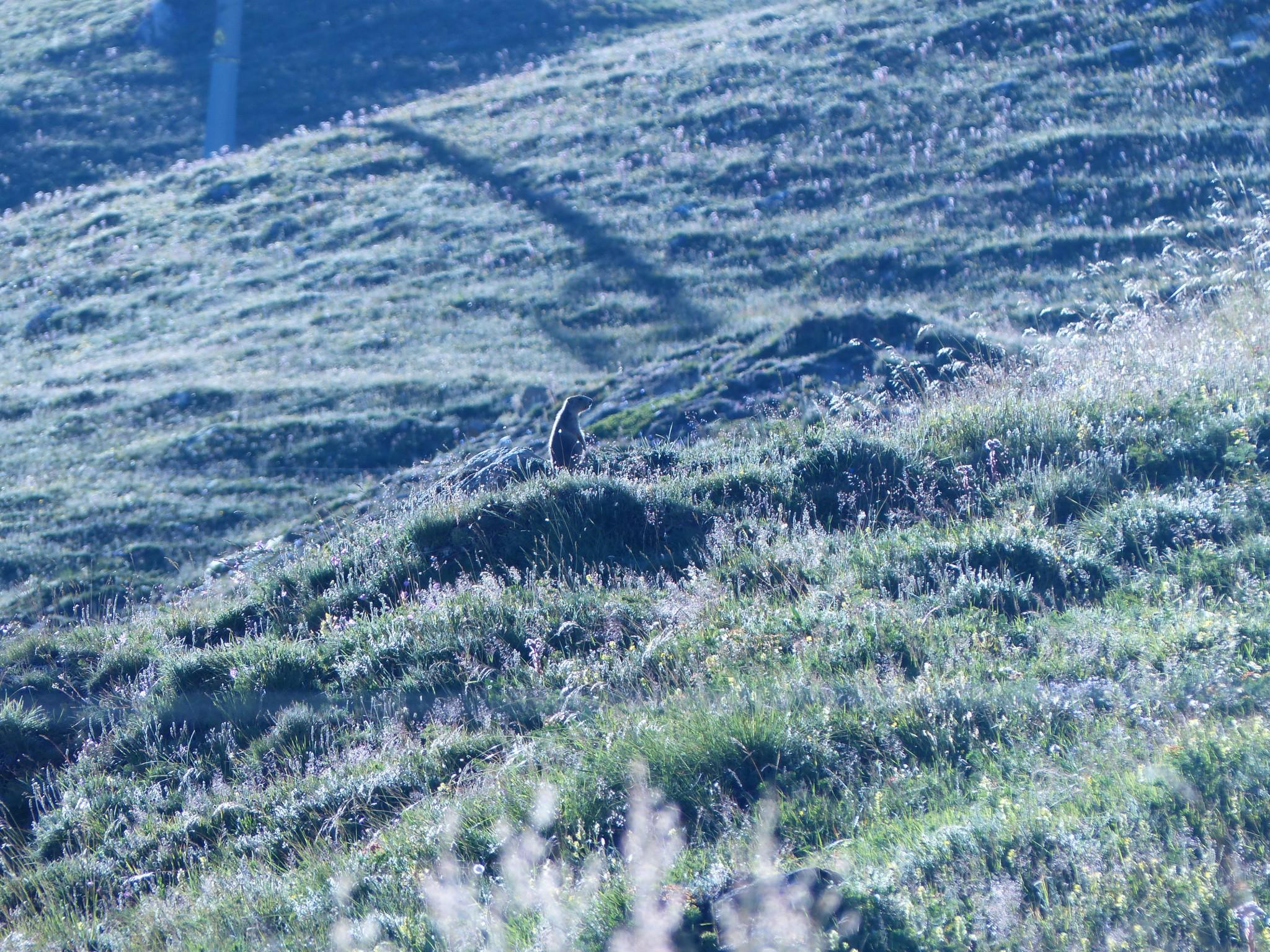 Quelques photos estivales, au pays des marmottes... Gallery_1137_2628_3867364
