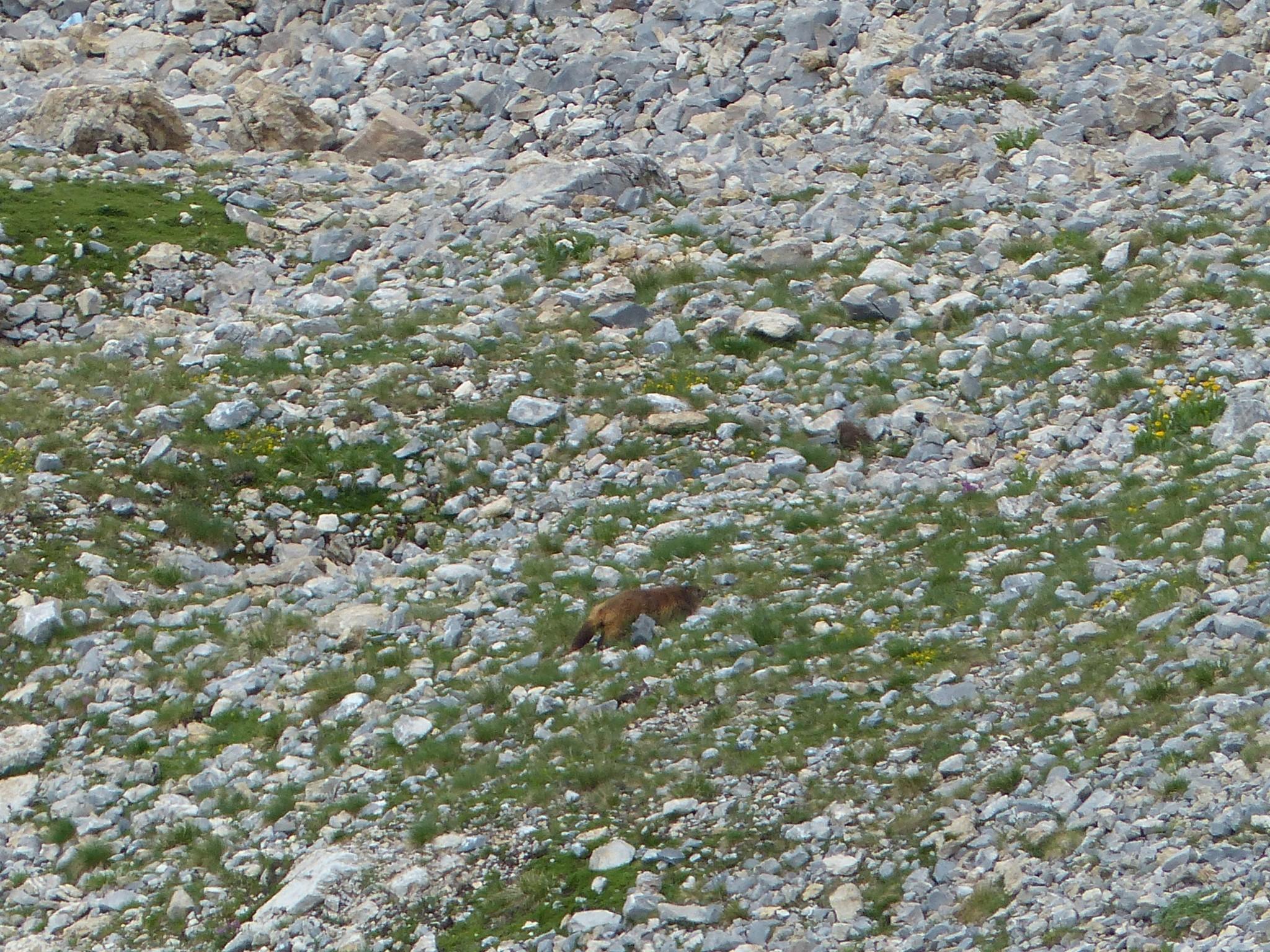 Quelques photos estivales, au pays des marmottes... Gallery_1137_2628_329618