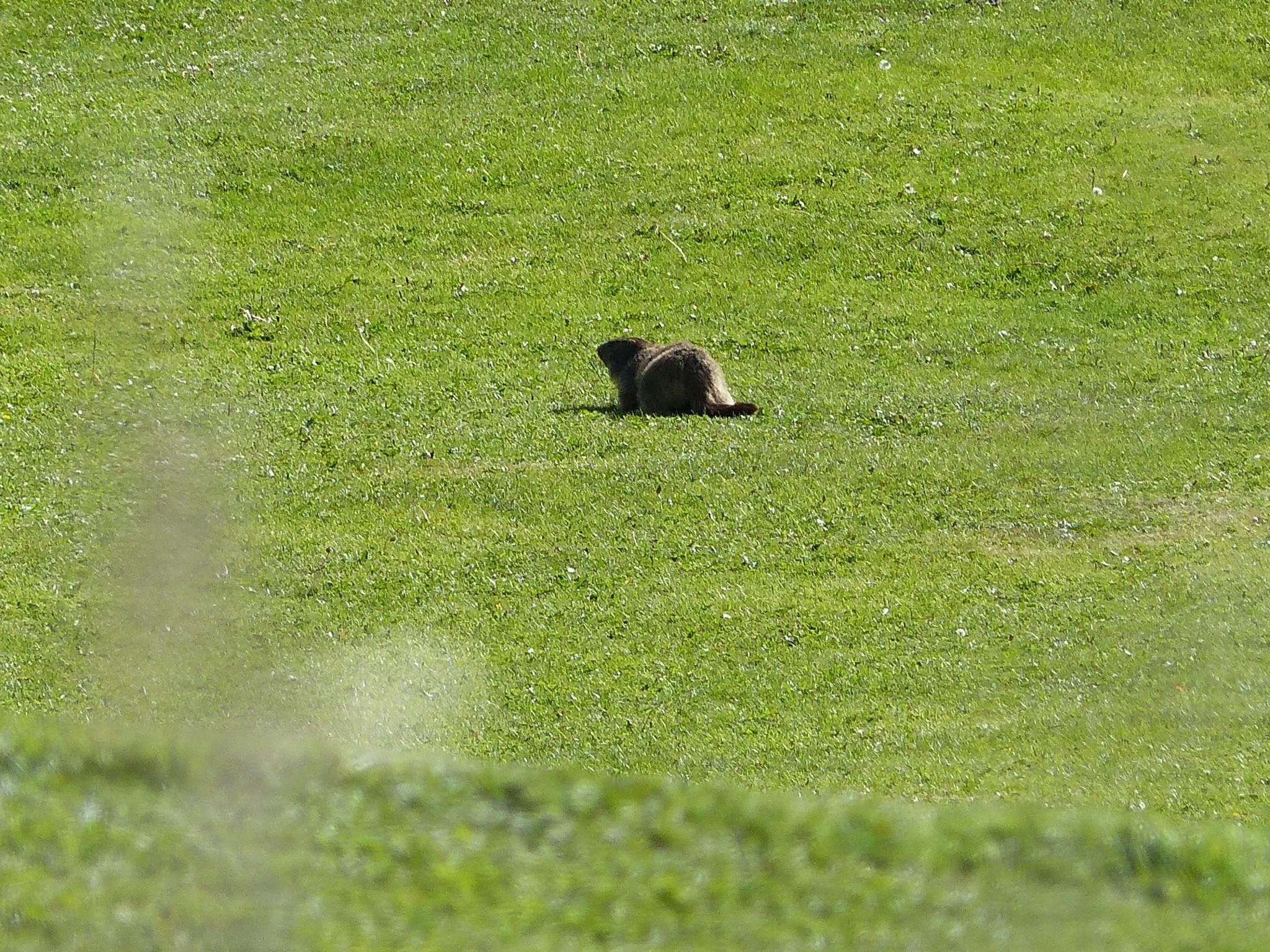 Quelques photos estivales, au pays des marmottes... Gallery_1137_2628_3681180