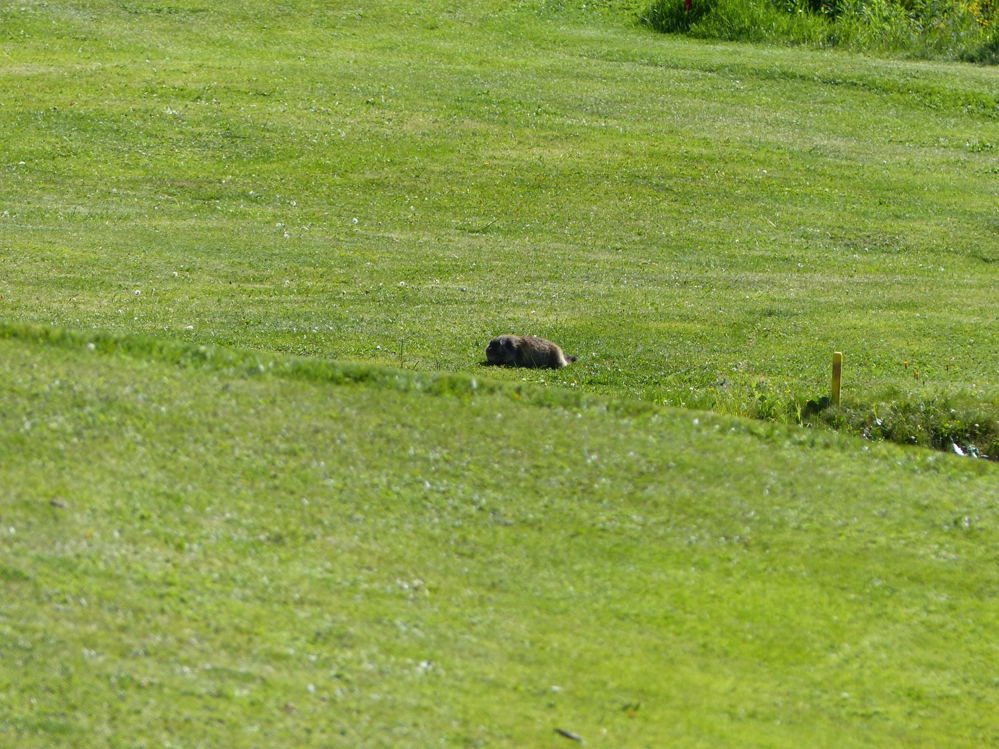 Quelques photos estivales, au pays des marmottes... Gallery_1137_2628_4598681