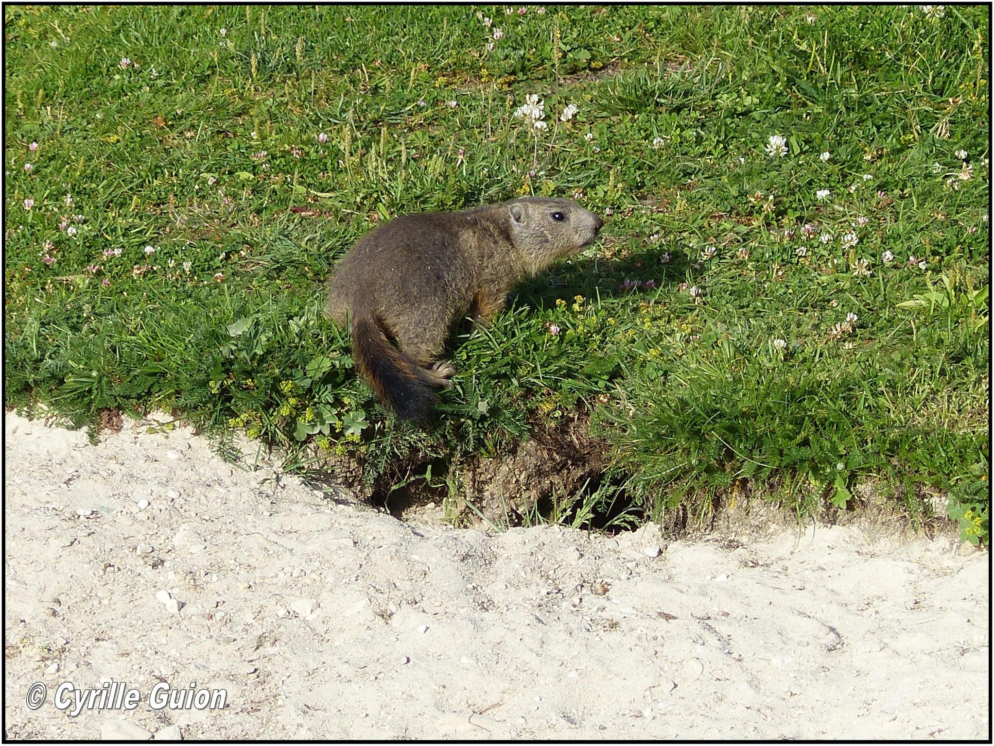 Quelques photos estivales, au pays des marmottes... Gallery_1137_2628_518881