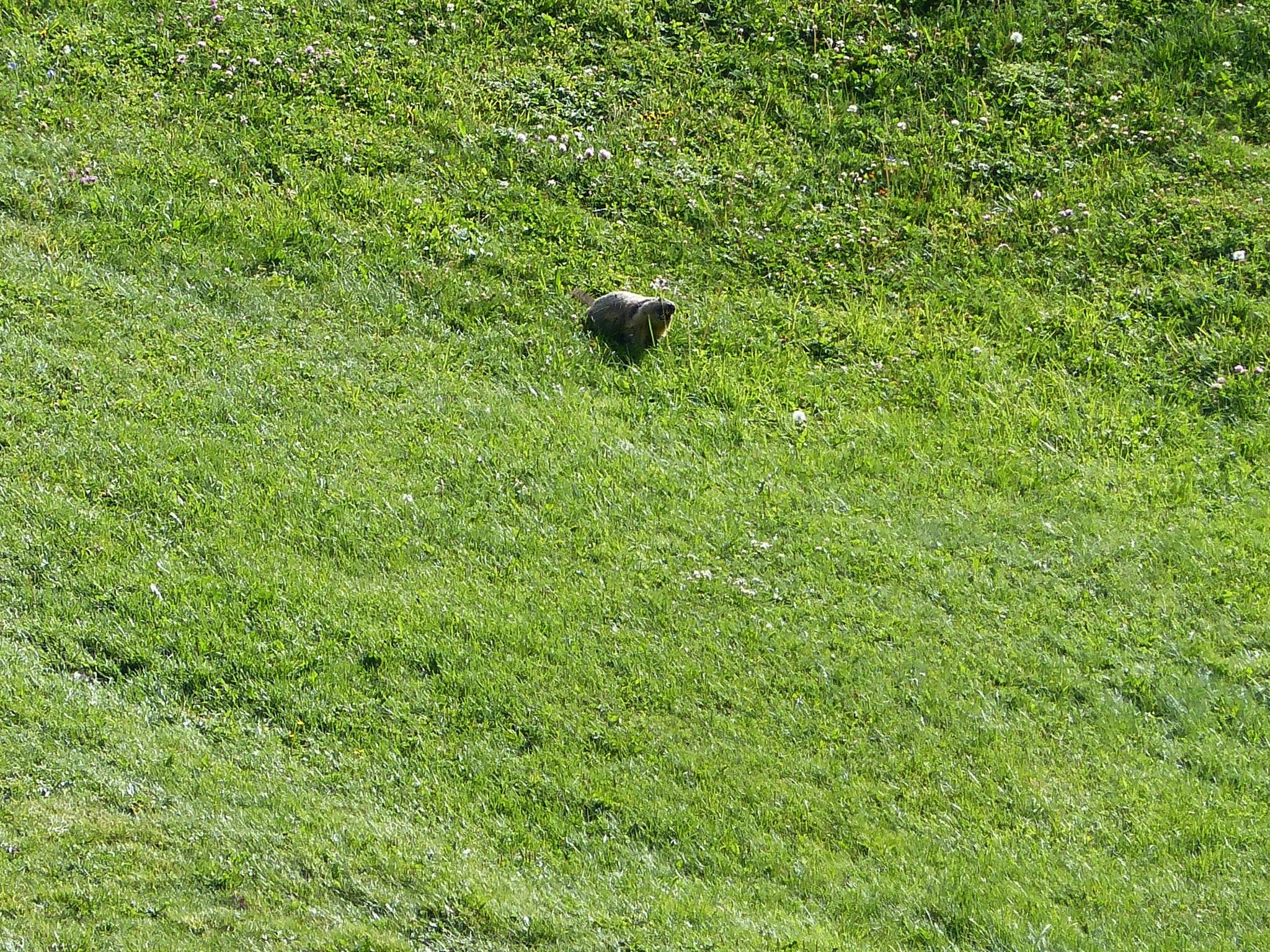 Quelques photos estivales, au pays des marmottes... Gallery_1137_2628_868250