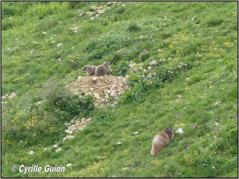 Quelques photos estivales, au pays des marmottes... Med_gallery_1137_2628_1016289