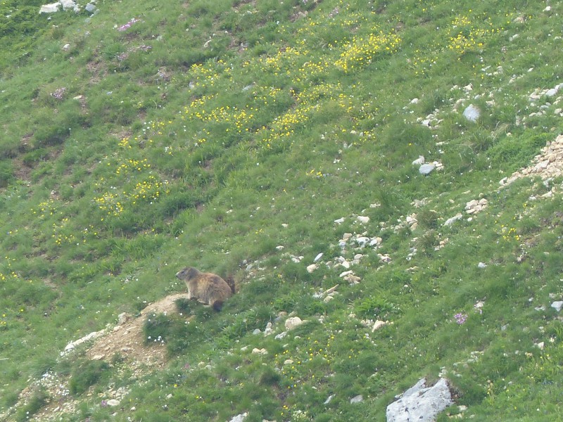 Quelques photos estivales, au pays des marmottes... Med_gallery_1137_2628_533396