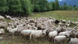 11-moutons sur la piste principale (vue vers le bas).jpg