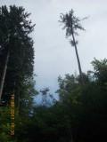 pylône 1 depuis la route du Fruttli
